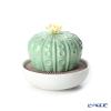 リヤドロ アストロフィツム-トロピカルブロッサム40190(10×11cm)【リキッドディフューザーレフィル 1本付】