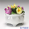 Aynsley 'Anniversary Flowers - Crocus / Feburary' Floral Pot