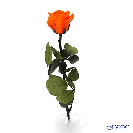 プリザーブドフラワー ヴェルディッシモ メディアベルローズオレンジ 白箱赤リボン